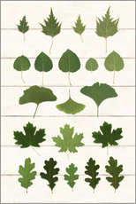 Wall sticker  Leaf Chart I Shiplap - Wild Apple