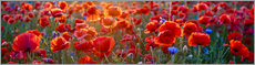Alu-Dibond  Poppy field - Art Couture