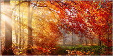 Alu-Dibond  Forest in Autumn - Art Couture