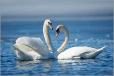 Premium poster  Romantic two swans