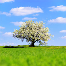 Premium poster Blossoming tree in spring