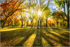 Premium poster Colorful autumn forest in sunlight