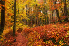 Premium poster Autumn in the deciduous forest