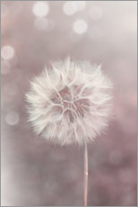 Wood print  Dandelion in rose - Andrea Haase Foto