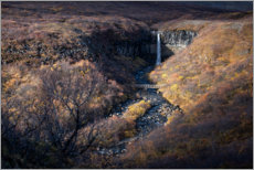 Acrylic print  Svartifoss waterfall in autumn on Iceland - Dennis Fischer