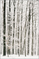 Canvas print  Trees in winter with snow - Peter Wey