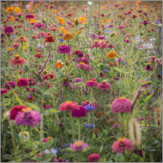 Canvas print  Wild flowers - Simon J. Turnbull
