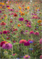 Aluminium print  The colorful wild flowers of France - Simon J. Turnbull