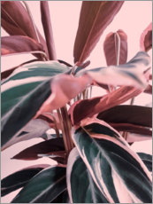 Premium poster  Foliage on pink - Emanuela Carratoni