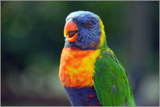 Gallery print  Parrot - GUGIGEI