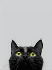Canvas print  Curiosity of the cat