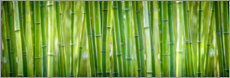 Alu-Dibond  GREEN - BAMBOO - Art Couture
