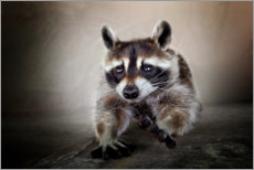 Wall sticker  Raccoon No. 3 - Bettina Dittmann
