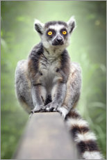 Wall sticker  Lemur - Bettina Dittmann
