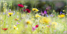 Poster  Wildflower meadow in bloom - Lichtspielart