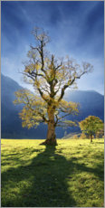 Premium poster  Autumn maple tree - Michael Rucker