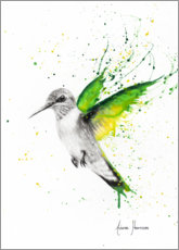 Premium poster Hummingbird wings