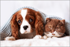 Gallery print  Friends - puppy and kitten - Janina Bürger