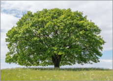 Premium poster  Proud oak in summer - Ingo Gerlach