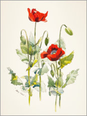 Alu-Dibond  Poppies watercolor - Mary Want