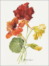 Canvas  Nasturtium, watercolor - Mary Want