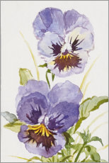 Premium poster Pansy watercolor