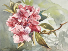 Premium poster Rhododendron watercolor