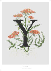 Foam board print  Y is for Yarrow - Charlotte Day