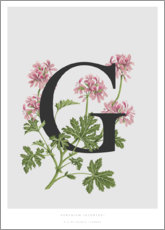 Canvas print  G is for Geranium - Charlotte Day