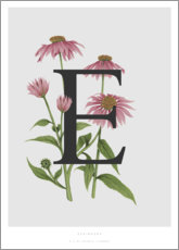 Wall sticker  E is for Echinacea - Charlotte Day
