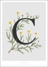 Premium poster  C is for Chamomile - Charlotte Day