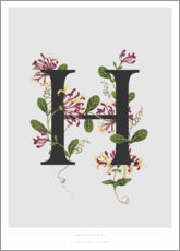 Gallery print  H is for Honeysuckle - Charlotte Day