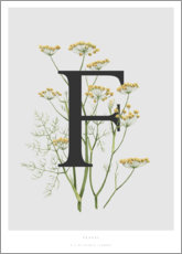 Acrylic print  F is for Fennel - Charlotte Day