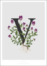 Gallery print  V is for Violet - Charlotte Day