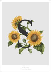 Acrylic print  S is for Sunflower - Charlotte Day
