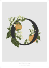 Wood print  O is for Orange Blossom - Charlotte Day