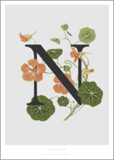 Wall sticker  N is for Nasturtium - Charlotte Day