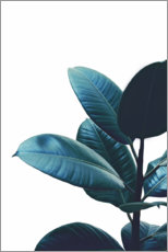Premium poster Rubber Plant Leaves