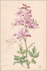 Foam board print  Dictamnus, also called Fraxinella - Balthasar van der Ast