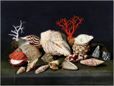 Foam board print  Still life with shells and corals - Jacques Linard
