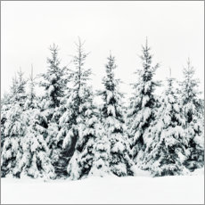 Wall sticker Winter forest