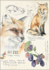 Alu-Dibond  Red Fox & Blackberries - Jennifer Parker