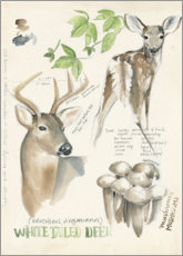 Wood print  Whitetailed deer & forest mushrooms - Jennifer Parker