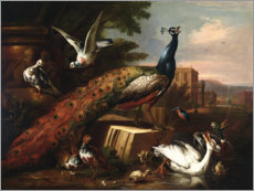 Premium poster  A peacock surrounded by doves, hens and aquatic birds - Pieter Casteels III