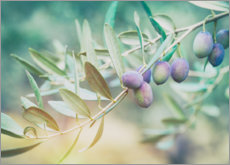 Poster  Juicy olive branch