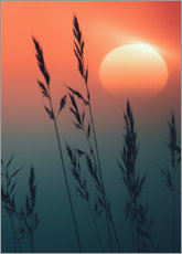 Premium poster  Sunrise over grasses