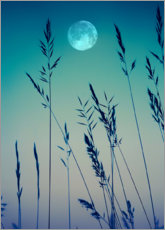 Canvas print  Full moon over the grasses
