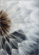 Canvas print  Inner life of a dandelion II