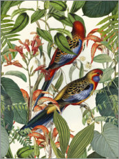 Foam board print  Tropical Birds - Andrea Haase