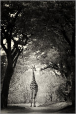Acrylic print  Giraffe in the clearing - Markus Niegtsch